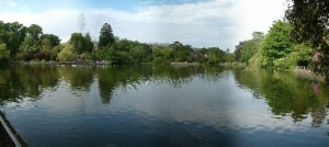 One of my favourite parks just down the road from the Uni, Brynmill Park!
