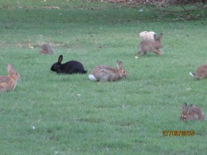 About 20 minutes walk from the apartment, there is a big park with many rabbits!